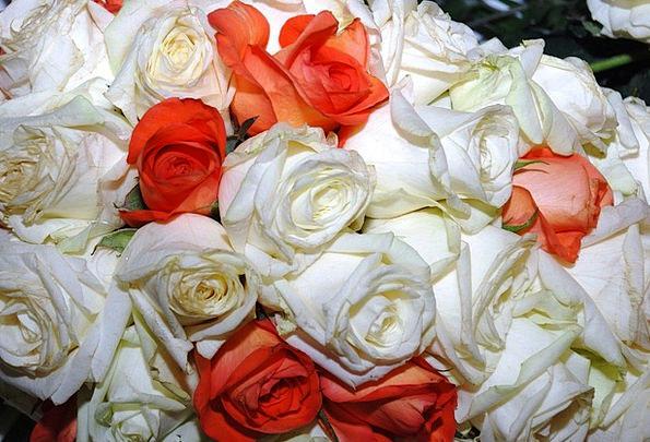 Roses Designs Rough Rose Design Wild Red Bloodshot