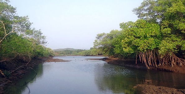 Mangrove Species Landscapes Nature Tidal Forest Ae