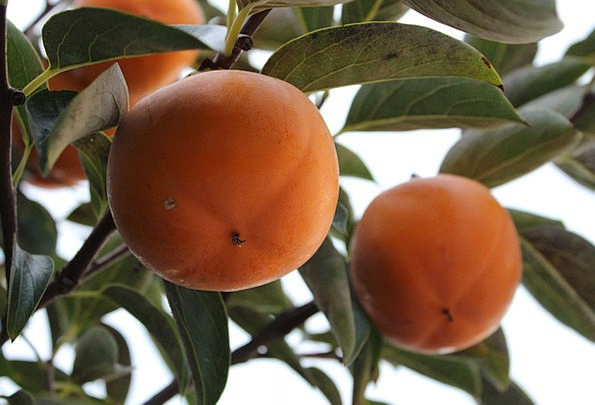 Persimmon Drink Ovary Food Dried Persimmon Fruit A