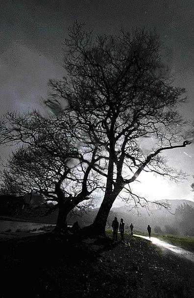 Rain Volley Landscapes Sapling Nature Cumbria Tree