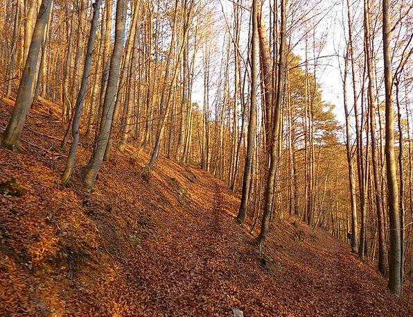 Forest Woodland Landscapes Sapling Nature Trees Pl