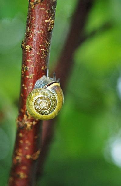 Snail Physical Plant Vegetable Animal Stem Stalk S