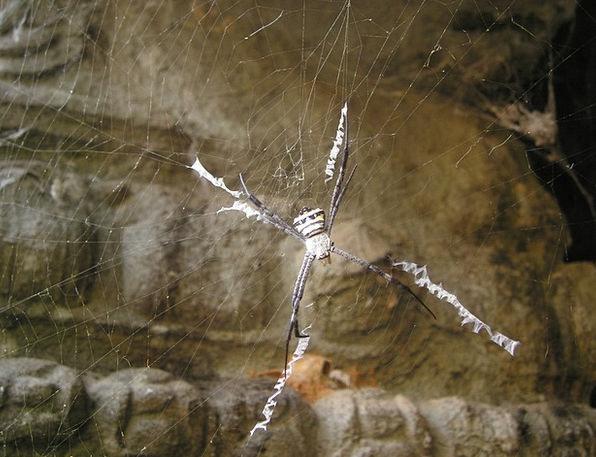 Spider Angkor Cobweb Wat So Cambodia Temple Asia S