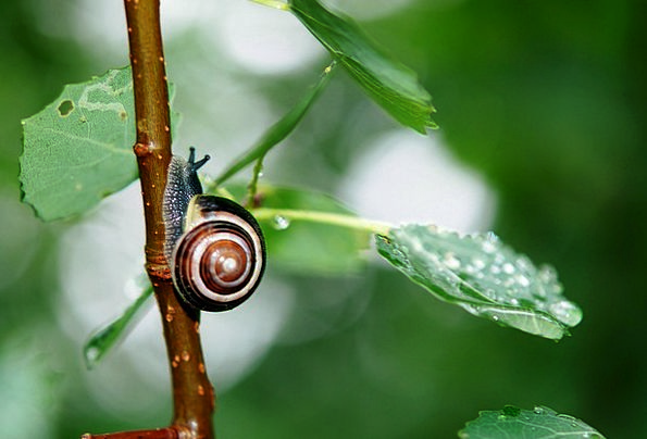 Snail Physical Leaves Greeneries Animal Nature Cou