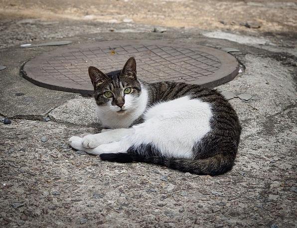 Cat Feline Physical Mammals Creatures Animal