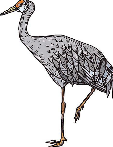 Heron Fowl Still Life Bird Yellow Wildlife Nature