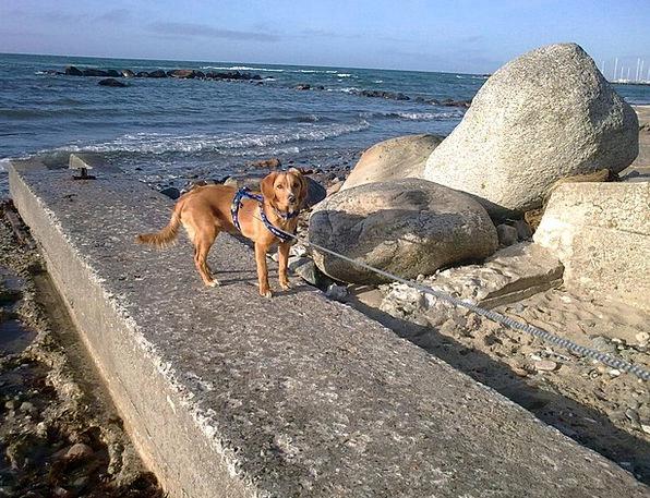 Dog Canine Marine Stone Pebble Sea