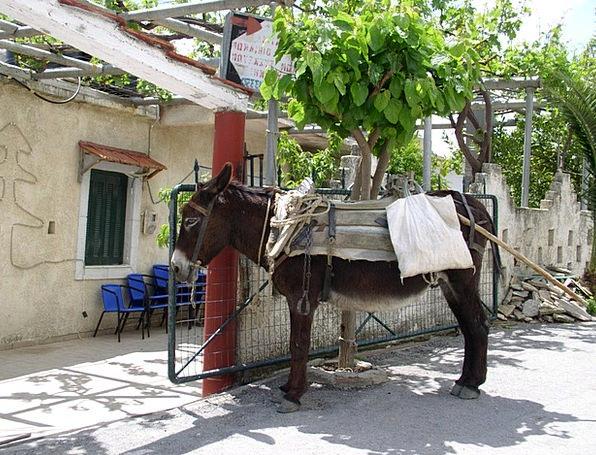 Donkey Animal Physical Last Animal Greece Wait Hol
