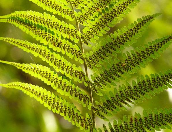 Fern Leaf Landscapes Taillight Nature Nature Count
