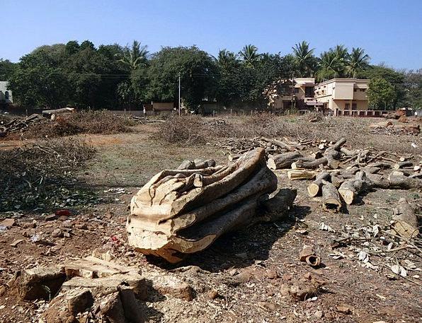 Felled Tree Stem Log Record Trunk Woodpile Dharwad