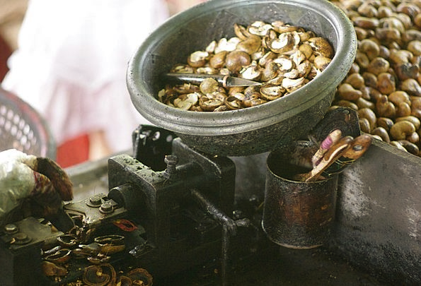 Cashew Nuts Louses Peeling Flaking Nits Peeled Unp