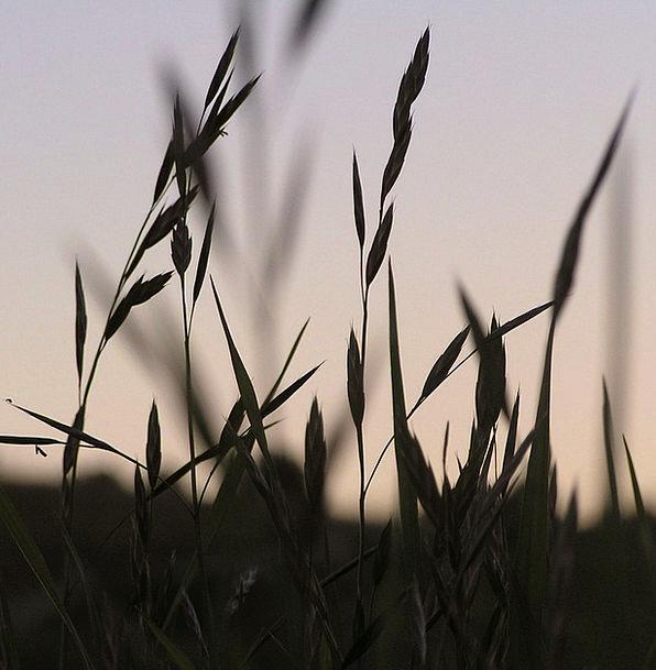 Grass Lawn Landscapes Vegetable Nature Natural Usu