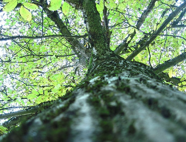 Tree Sapling Landscapes Woodland Nature Nature Cou
