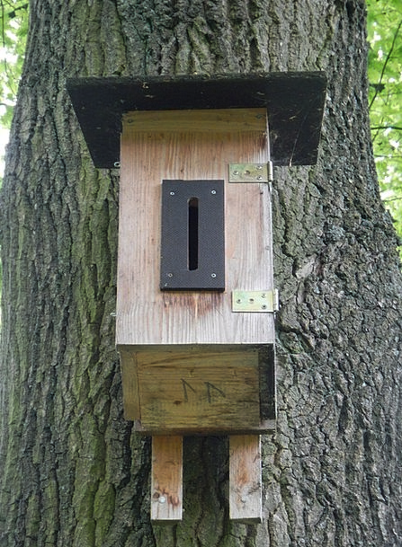 Nesting Box Birdcage Bird Feeder Aviary Tree Sapli