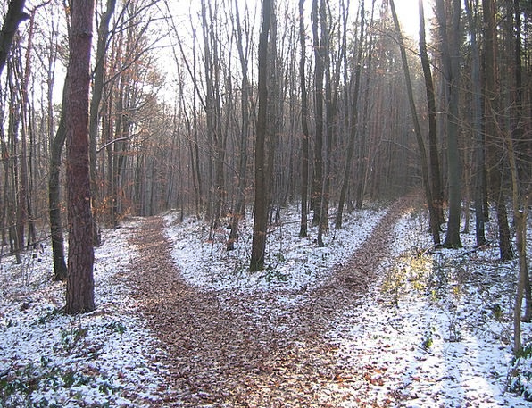 Forest Path Season Crossroads Junction Winter