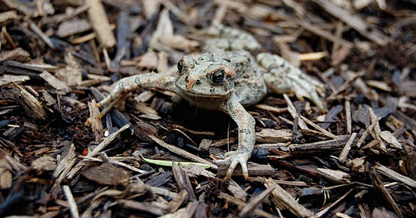 Toad Landscapes Nature Forest Woodland Amphibian F