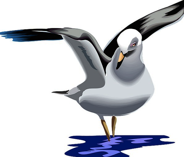 Seagull Sea-Gull Gull Animal Bird Fowl Fly Waterfo