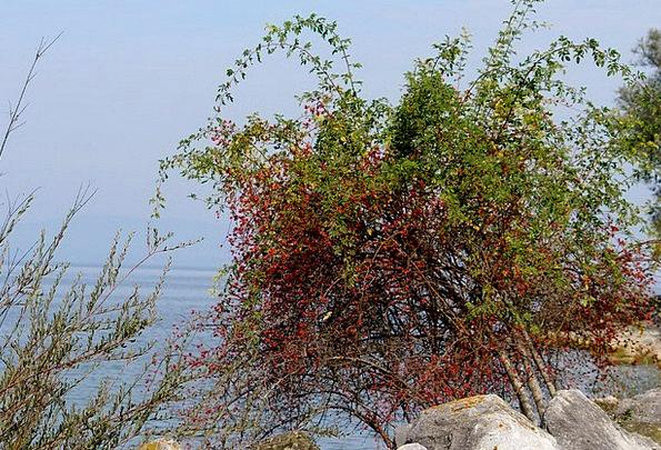 Bank Set Shore Stones Gravels Lakeside Wild Rose R