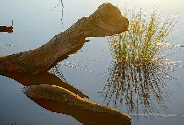 Wood Timber Landscapes Stem Nature Reflection Like