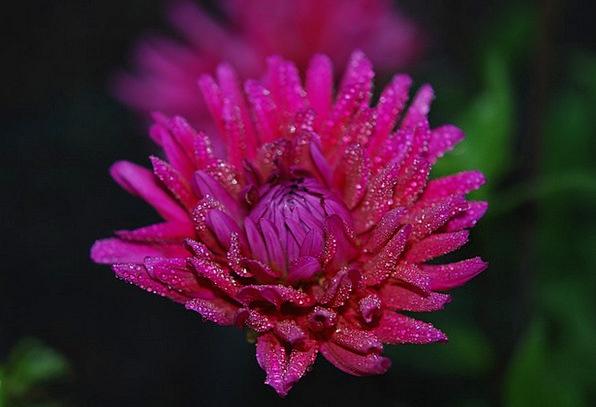 Flower Floret Flushed Floral Flowery Pink Garden P