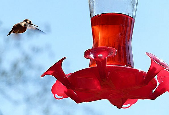 Hummingbird Fowl Feeding Station Bird Flying Hover