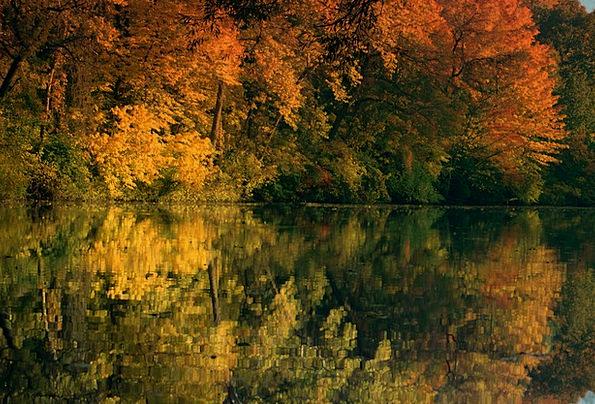 Pond Pool Landscapes Plants Nature Landscape Scene