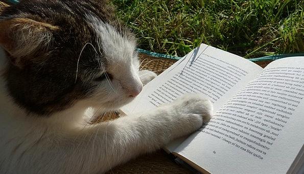 Reading Interpretation Volume Cat Feline Book Lite
