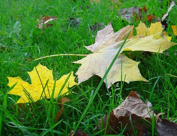 Sheet Piece Fall Autumn