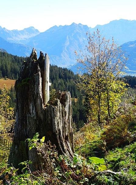 Tree Stump Record Storm Damage Log Dead Plant Moun