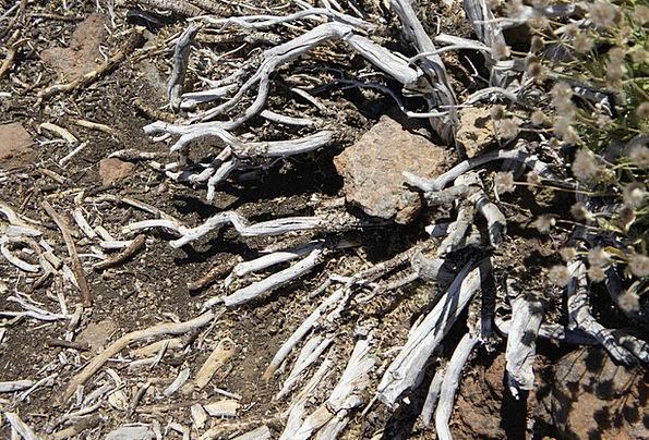 Roots Origins Landscapes Rising Nature Plant Veget