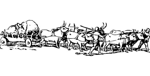 Bullock Wagon Huge Enormous Cart Traditional Pull