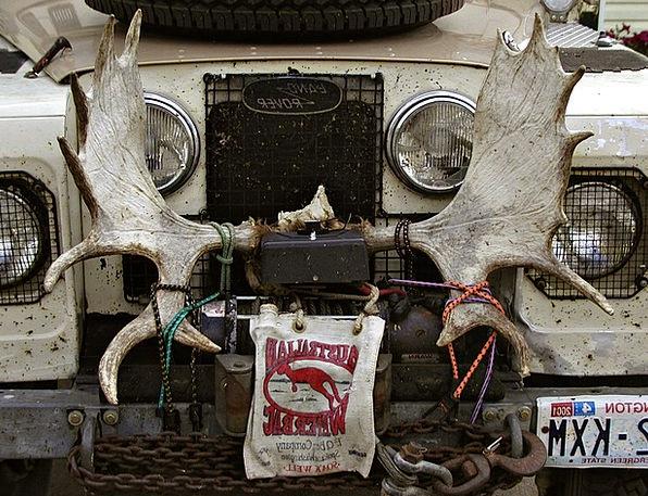 Car Carriage Traffic Transportation Moose Vehicle