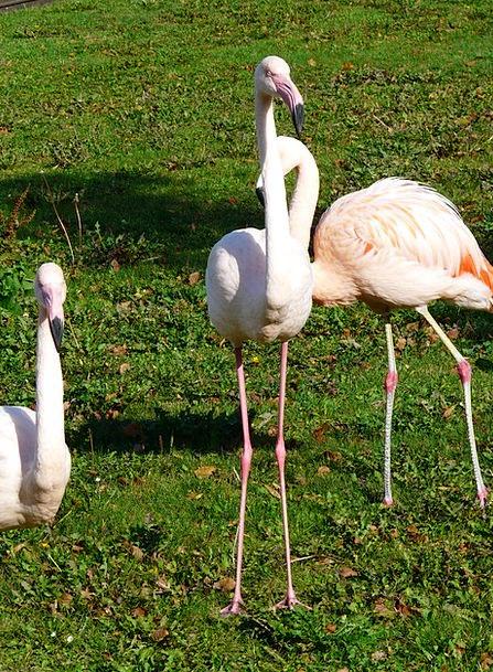 Flamingos Snowy Stilts Feet White Stand Feet Bases