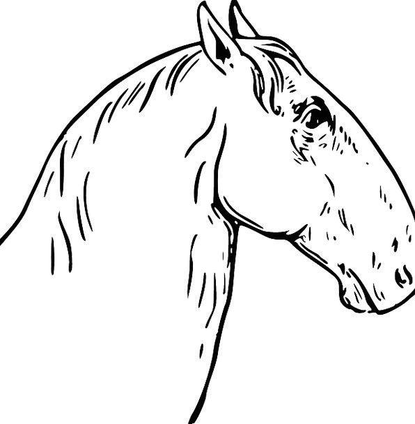 Head Skull Mount Equine Horsey Horse Mane Shock An