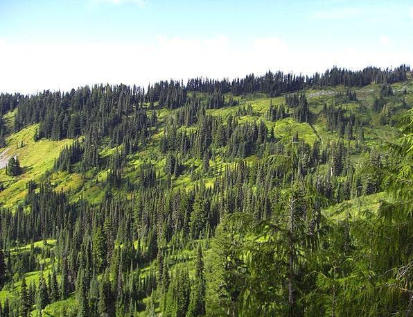 Pine Long Landscapes Sapling Nature Mountain Crag