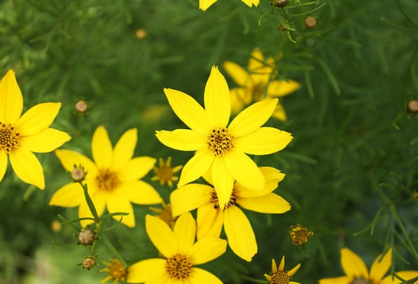 Flower Floret Creamy Flowers Plants Yellow