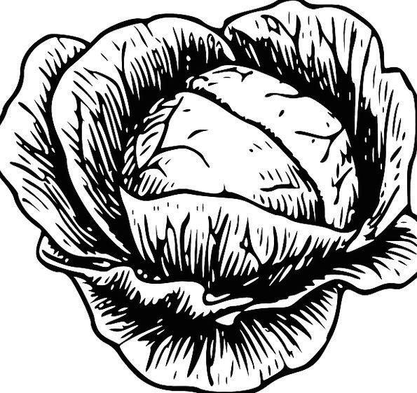 Cabbage Drink Food Vegetarian Fruitarian Vegetable