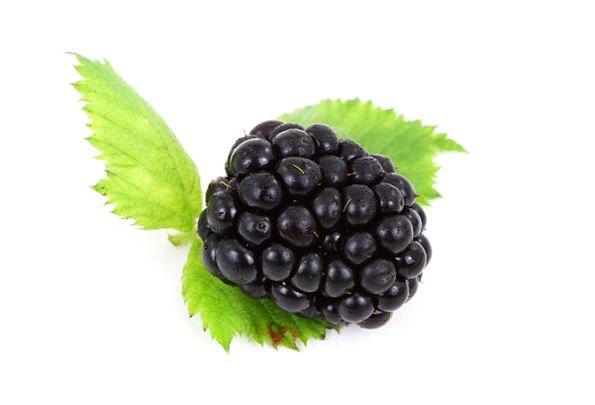 Berry Drink Dark Food Blackberry Black Vitamin Foo