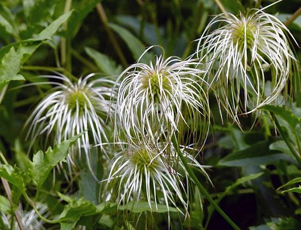 Flower Floret Landscapes Nature Floral Flowery Gol