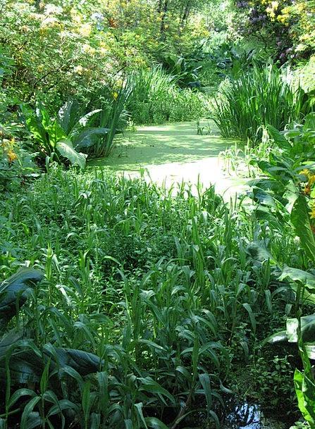 Pond Pool Landscapes Nature Green Lime Pond Plant