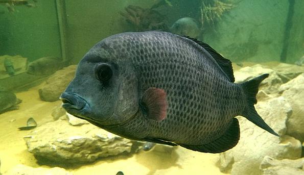 Fish Angle Big Large Fish Tank Swim Underwater Sub