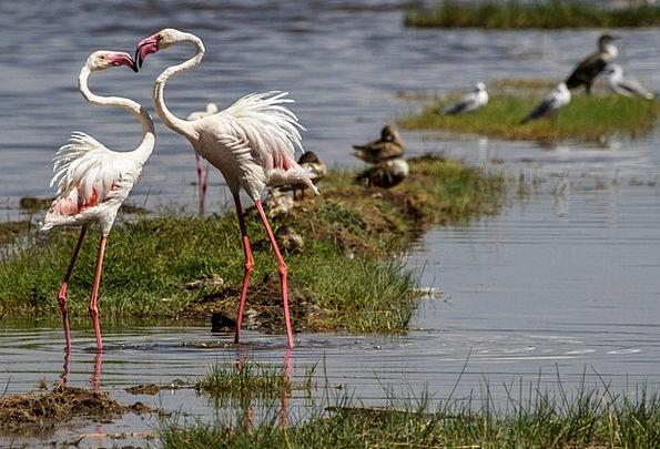 Flamingos Landscapes Natures Nature Water Bird Bir