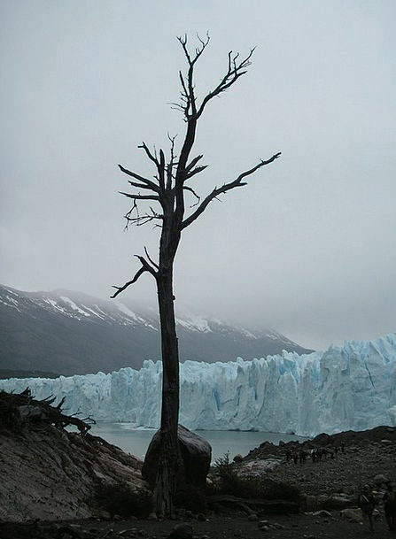 Chile Dead Tree Glacier Clouds Vapors
