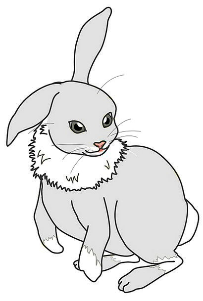 Rabbit Bunny Attractive Animal Physical Cute