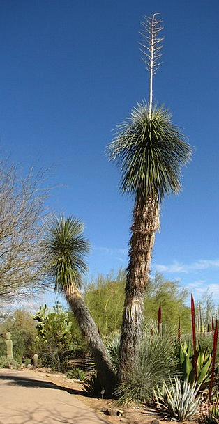 Yucca Landscapes Reward Nature Nature Countryside