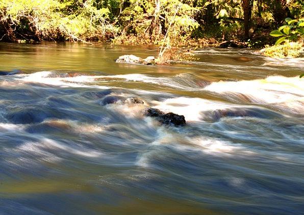 Florida Landscapes Watercourse Nature Creek Stream