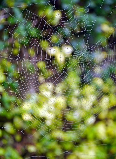 Spider Web Landscapes Nature Cobweb Spider Network