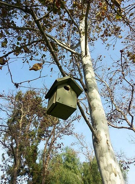 Bird Fowl Shell Birdhouse Nest Tree Sapling
