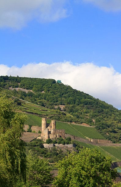 Burg Ehrenfels Landscapes Winery Nature Castle-Bin